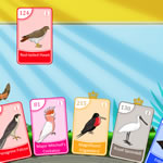 Bataille Oiseaux